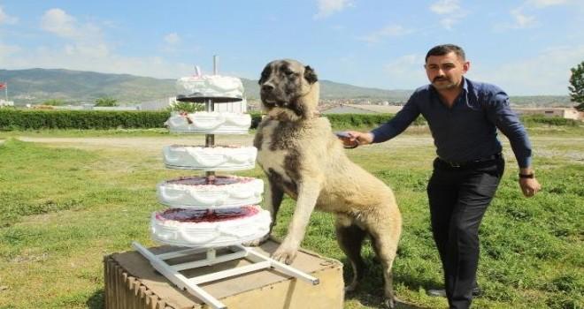 Köpeğinin doğum gününü 5 katlı pastayla kutladı