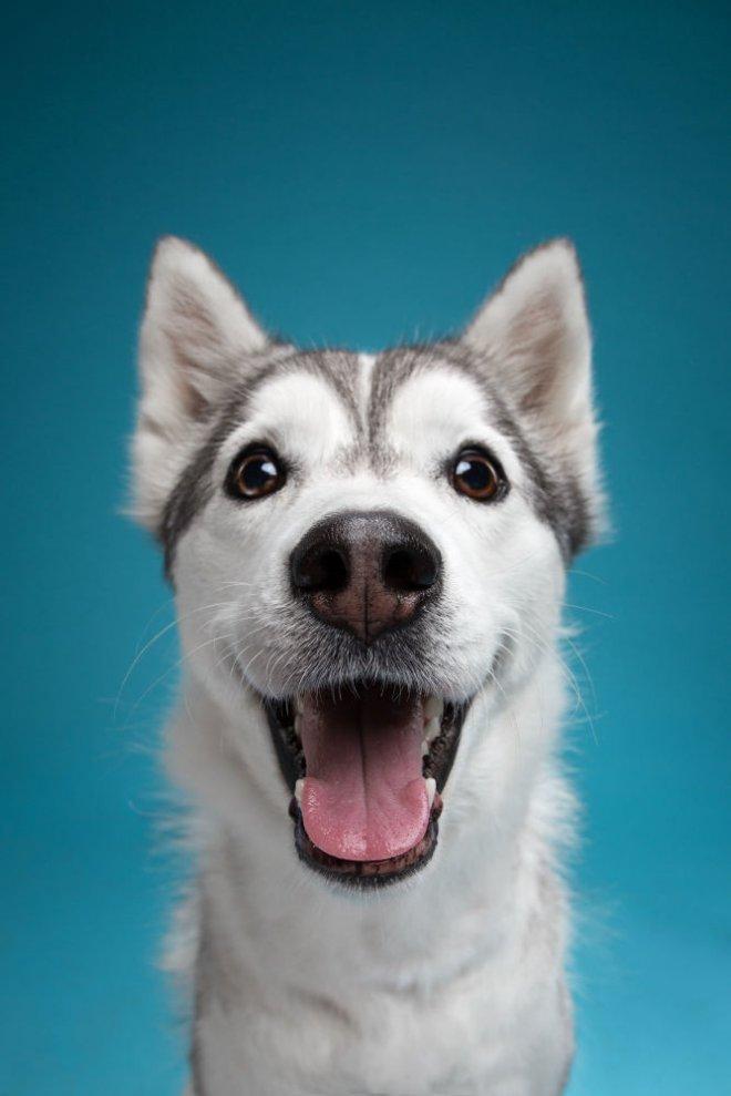 Bakışlarıyla duygularını ifade eden sevimli köpekler