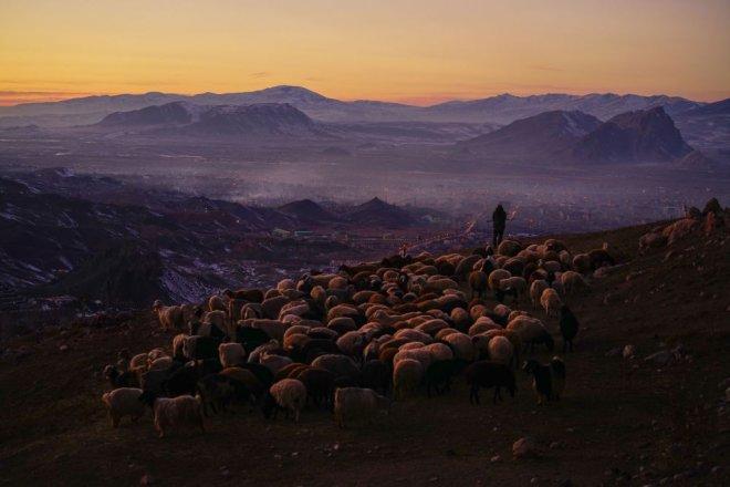 2018 Sony Dünya Fotoğrafçılık Yarışması'nın kazananları