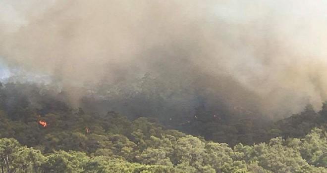 Suriye sınırında orman yangını: Hatay'da önlem alındı
