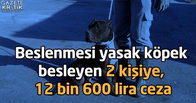 Beslenmesi yasak köpek besleyen 2 kişiye, 12 bin 600 lira ceza