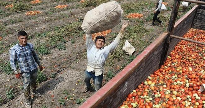 Mevsimlik işçinin tazminat için en az 2 sezon çalışması şart