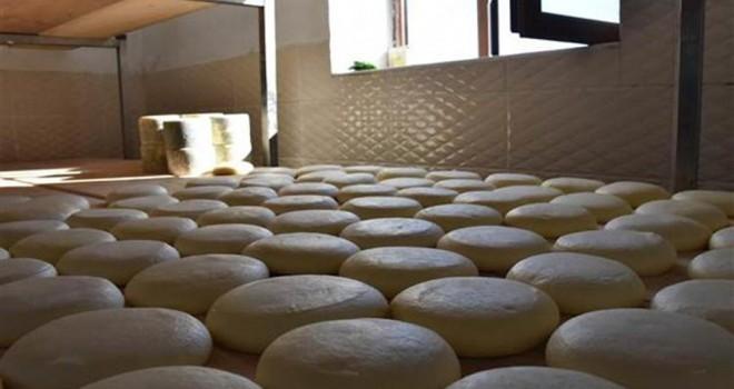 Malakan peynirini yeniden üretmek için 5 yıl uğraştılar