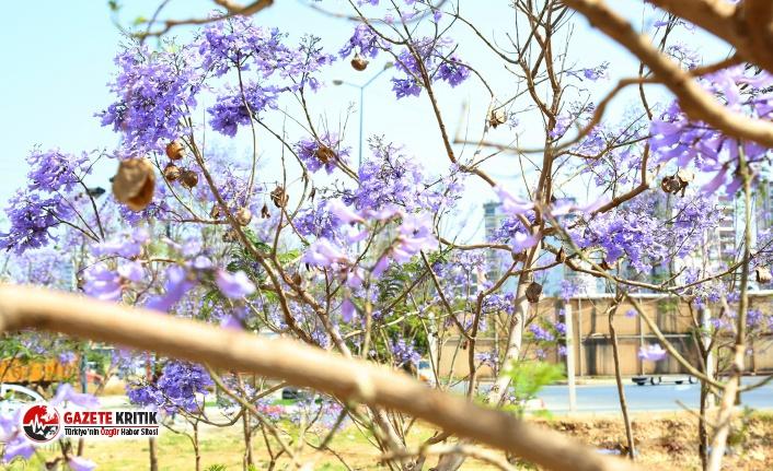 Mezitli'de bahar havası