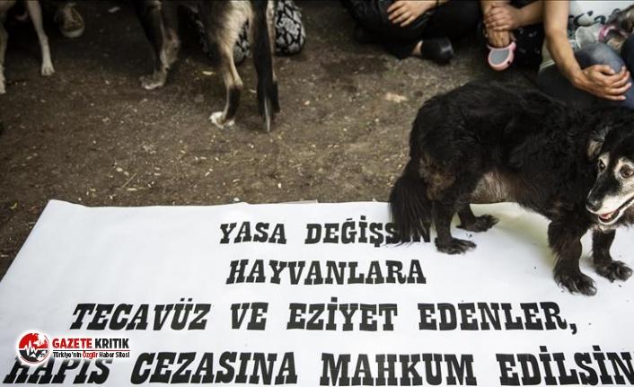 """""""Hayvana Şiddet Suçtur"""" diyen 1 milyon 457 bin 612 kişinin imzaları TBMM'ye teslim edildi"""