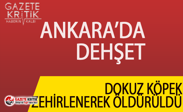 Ankara'da dehşet:Dokuz köpek zehirlenerek öldürüldü