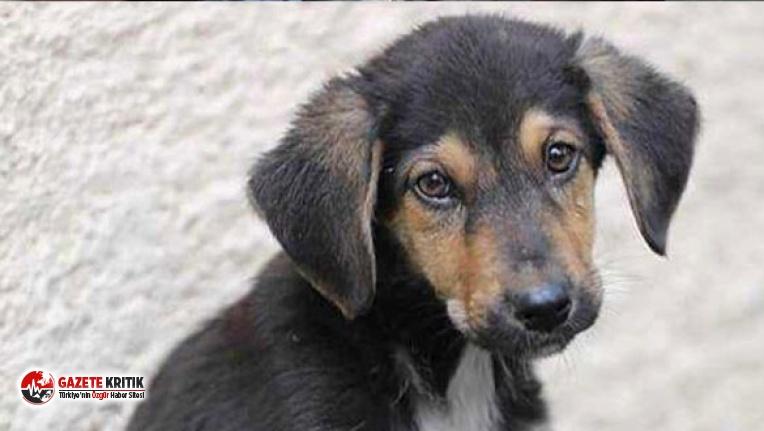 Çocukların dikkati sayesinde, köpek yavrusu kurtarıldı