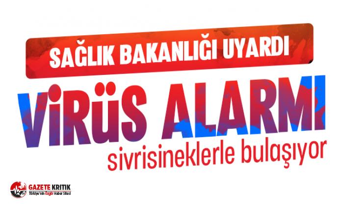 İstanbul'da Batı Nil Virüsü paniği 4 vaka tespit edildi sivrisinekle bulaşıyor