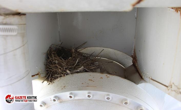 Kuşlar beton mikserine yuva yaptı; aracı çalıştırılmama kararı alındı