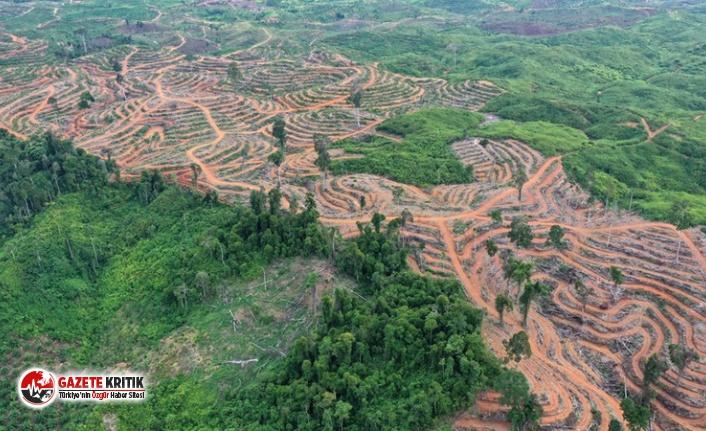 Bilim insanlarından uyarı: Toprağı sömürmeye son verin