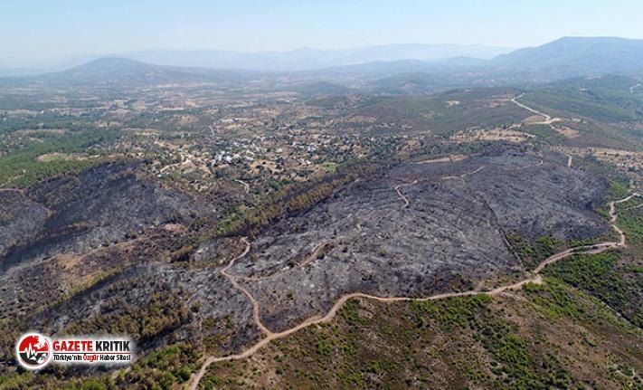 Bodrum'daki yangında tam 40 hektar alan simsiyah oldu
