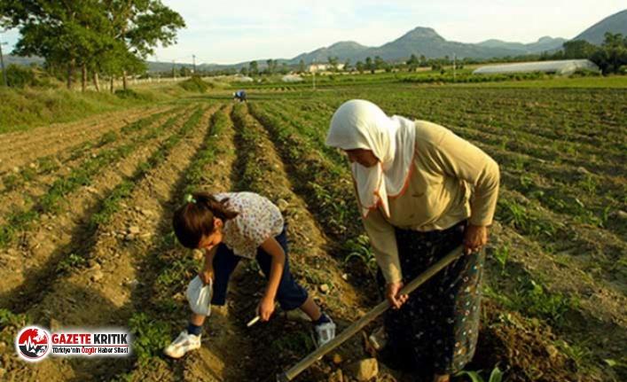 Çiftçiye bir darbe de damat Berat'tan geldi