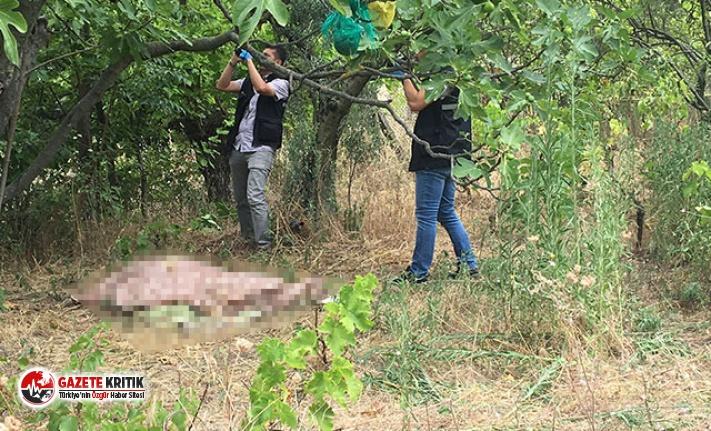 İncir ağacının dalları arasına boynu sıkıştı, nefessiz kalıp öldü