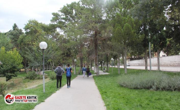 Nurhan Çiftçibaşı Parkı'ndaki Kuruyan Ağaçlar Kesiliyor