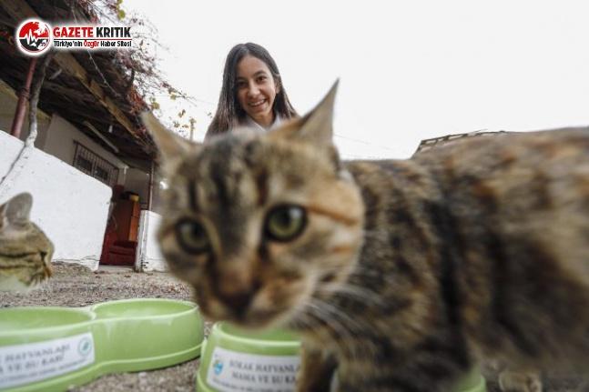 Sokak Kedileri İçin Harçlığı Yetmedi, KDK'ya Başvurdu