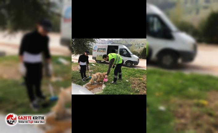 Çiğli Belediyesi sokak hayvanlarını unutmadı
