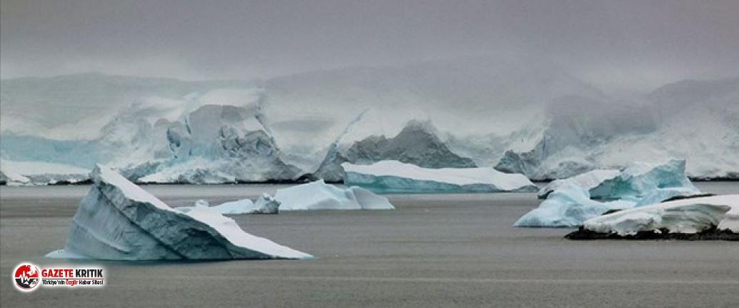 Antarktika'da 90 milyon yıl önce yağmur ormanı olduğuna dair kanıt bulundu