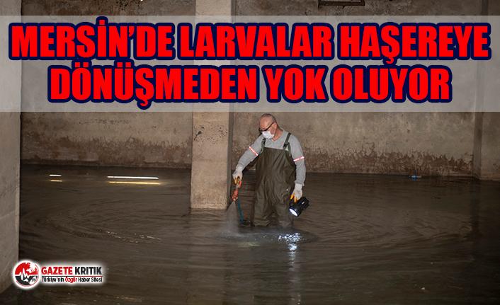 """Dr. Bülent Halisdemir: """"Bir bardak suda 6 bine yakın sivrisinek üreyebiliyor"""""""