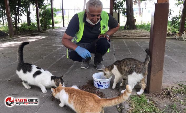 Patili Dostlar, Sokağa Çıkma Yasağı Süresince de Kartal Belediyesi'ne Emanet