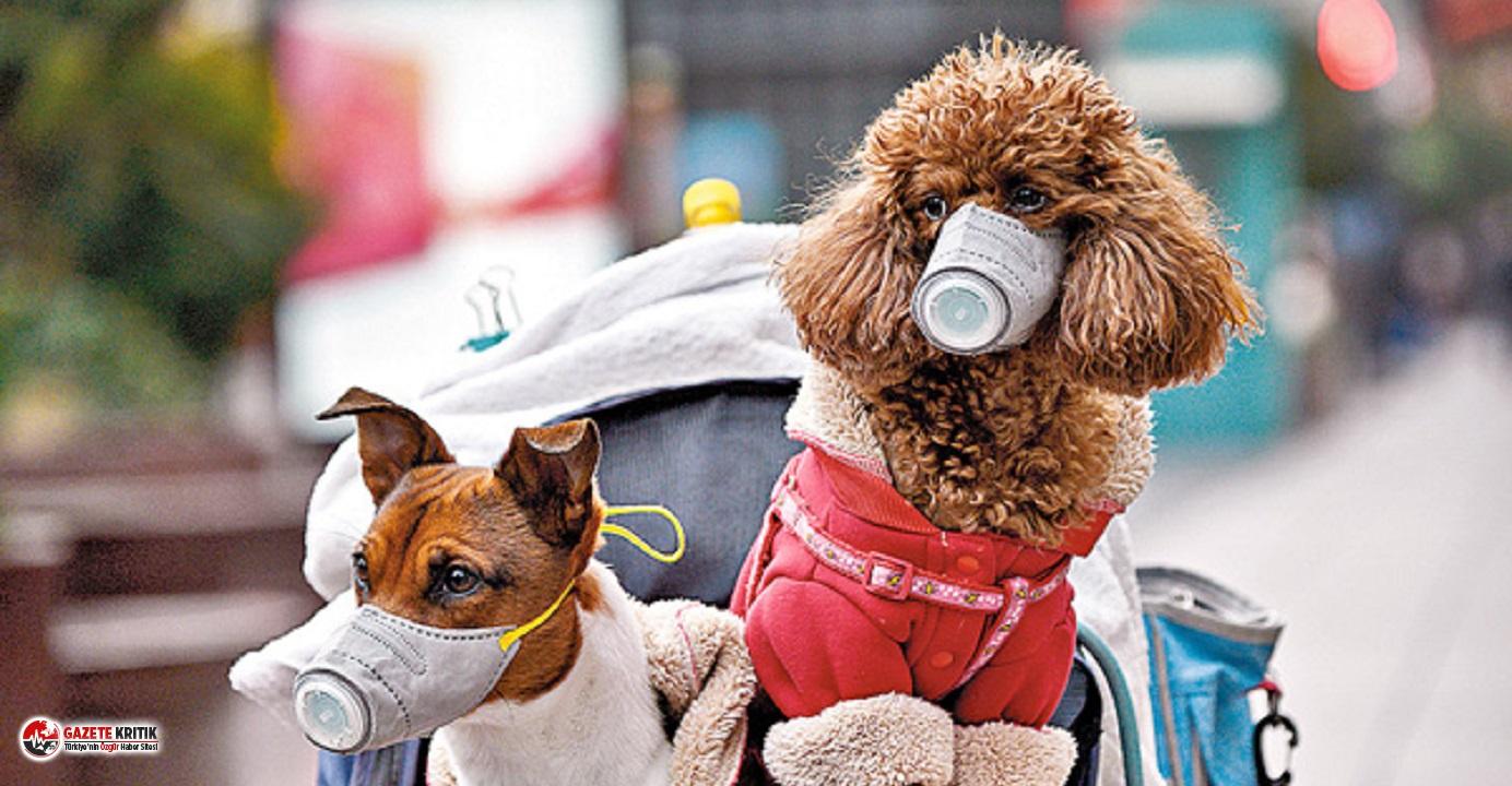 Sağlık Bakanlığı yayınladı: Tedavi süresince, evcil hayvanlara başka bir evde bakım sağlanmalı
