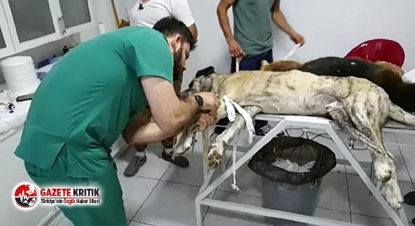 Çöplükte zehirlenmiş halde bulunan köpekler kurtarılamadı