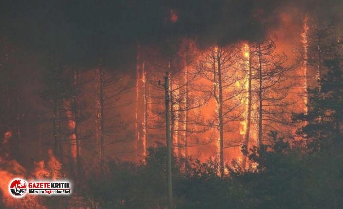 Bulgaristan-Türkiye sınırında çıkan yangın kontrol altına alındı