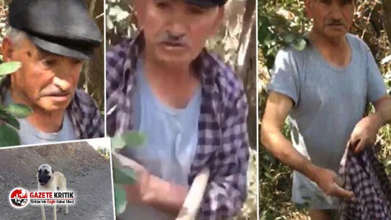 Sivas'ta 75 yaşındaki adam, köpeğe tecavüz ederken yakalandı!