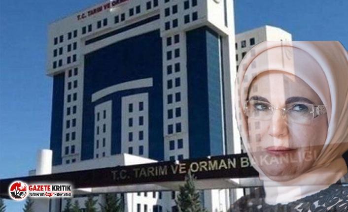 5 daire başkanının görevden alınmasının perde arkasında Emine Erdoğan'ın kuzenine verilen ihalesiz 'direk' işi mi var?