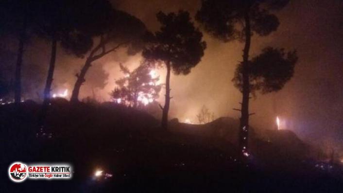 Aydın'da çıkan orman yangını kontrol altına alındı