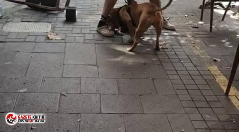 Beşiktaş'taki pitbull dehşetine para cezası