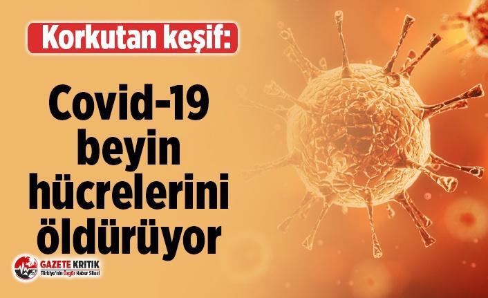 Covid-19 beyin hücrelerini öldürüyor