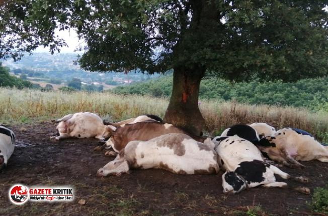 Kan emici sinek sürüleri, yüzlerce at ve ineği kanlarını emerek öldürdü