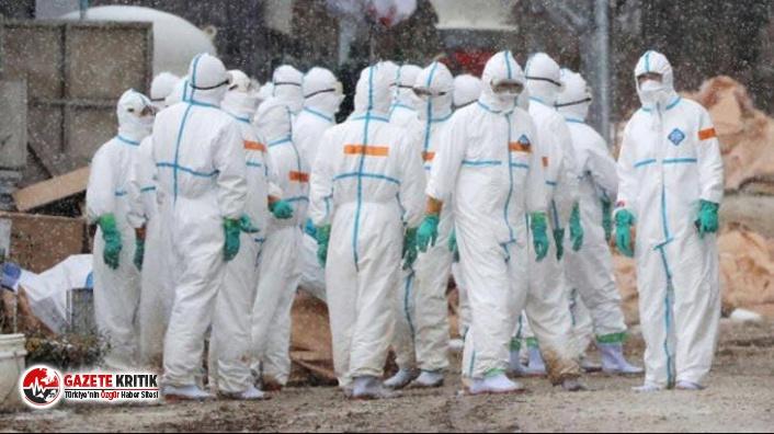 Kazakistan'da kuş gribi salgını başladı! 11 yerleşim yeri karantinaya alındı
