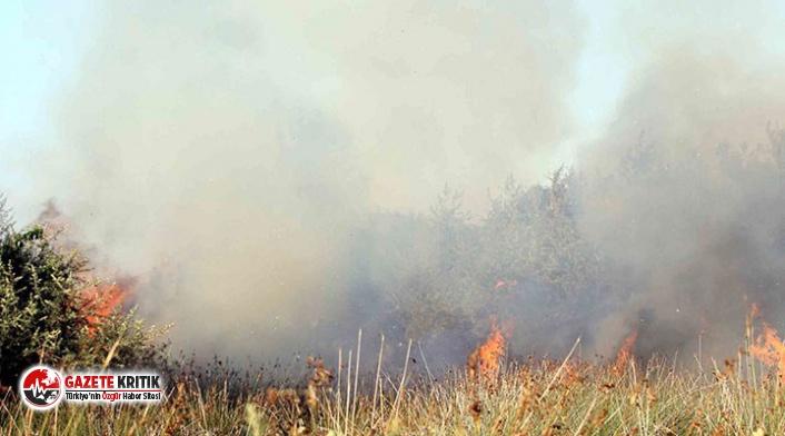 Kızılırmak Deltası Kuş Cenneti'nde yangın!