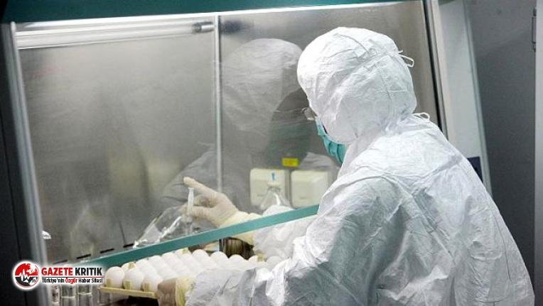 """Koronavirüsün ardından Çin'de şimdi de """"Brusella bakterisi"""" salgını baş gösterdi"""