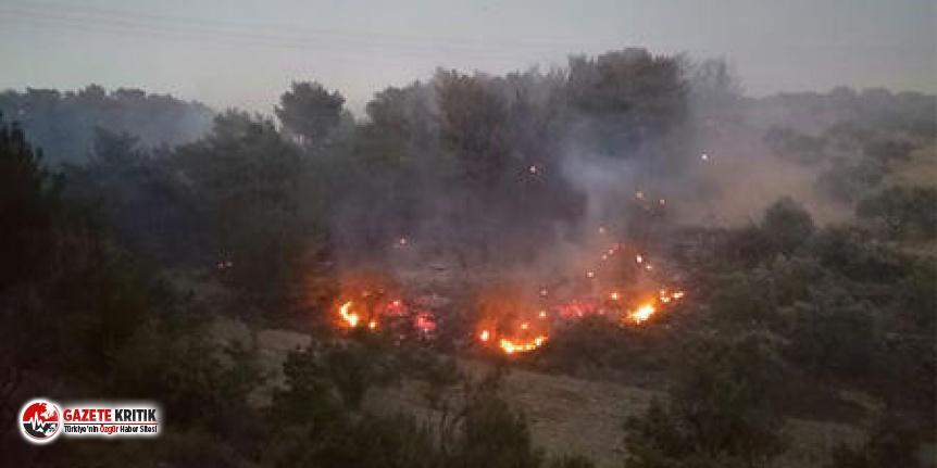 Soma'da ormanlık alanda yangın!