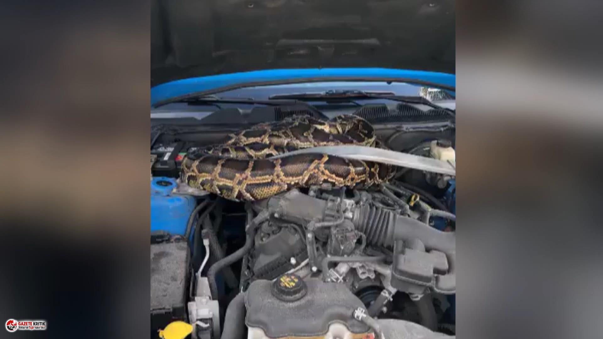 ABD'de aracının kaputunu açınca dehşeti yaşadı