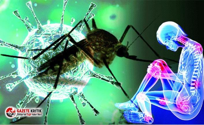 Chikungunya hastalığı için kırmızı alarm! Belirtileri koronavirüs ile aynı