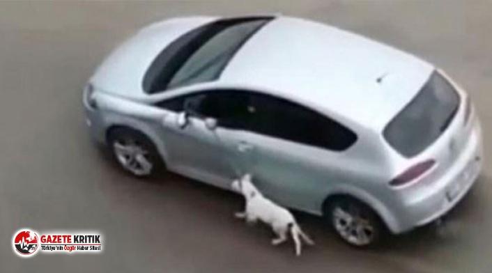 Köpeği arabaya bağlayıp eziyet eden bir cani yakalandı!