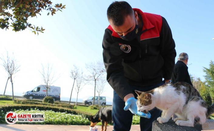 Kartal Belediyesi, 4 Günlük Kısıtlamada Sokak Hayvanlarını Unutmadı