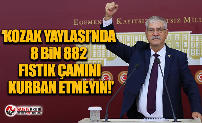 CHP'li Kani Beko:'Kozak Yaylası'nda 8 bin 882 fıstık çamını kurban etmeyin!'