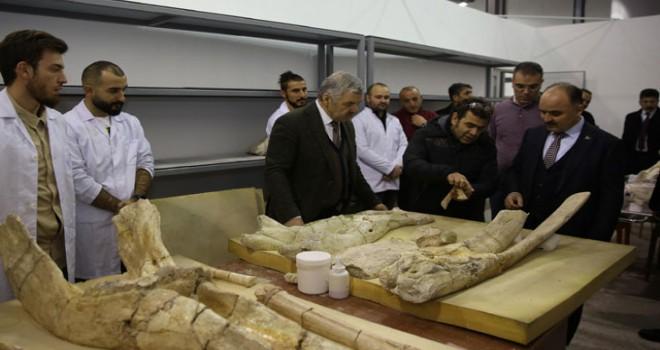 7,5 milyon yıllık fosiller Bilim Merkezi'nde