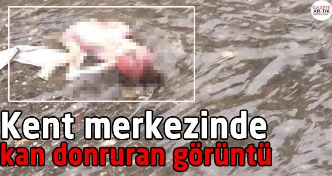 Batman'da taşan kanalizasyondan bebek cesedi çıktı