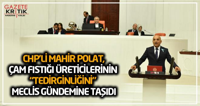 """CHP'Lİ MAHİR POLAT,ÇAM FISTIĞI ÜRETİCİLERİNİN """"TEDİRGİNLİĞİNİ"""" MECLİS GÜNDEMİNE TAŞIDI"""