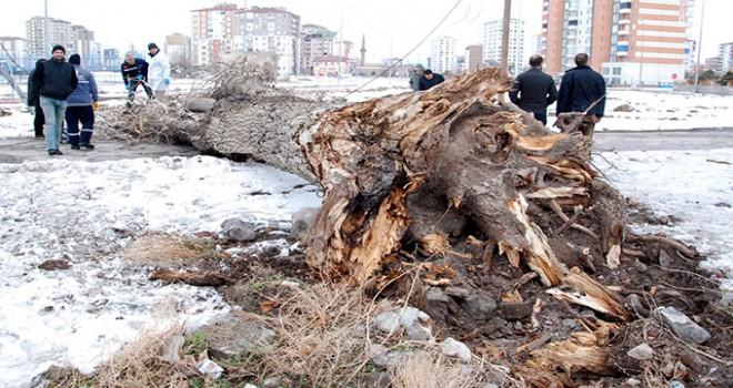 Fırtınanın devirdiği ağacın altında kalıp, öldü