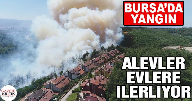 Bursa'da orman yangını! Dumanlar karayolunu kapladı