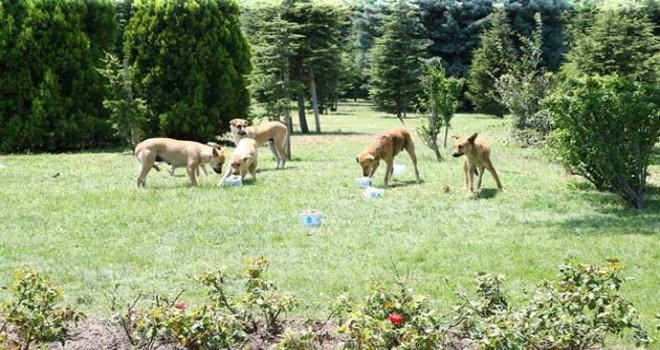 Sıcaktan bunalan hayvanların yardımına belediye koştu
