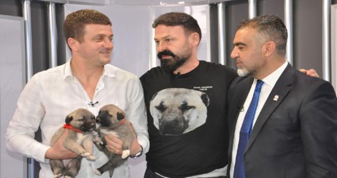 Hakan Keleş'e Kangal köpeği hediye edildi