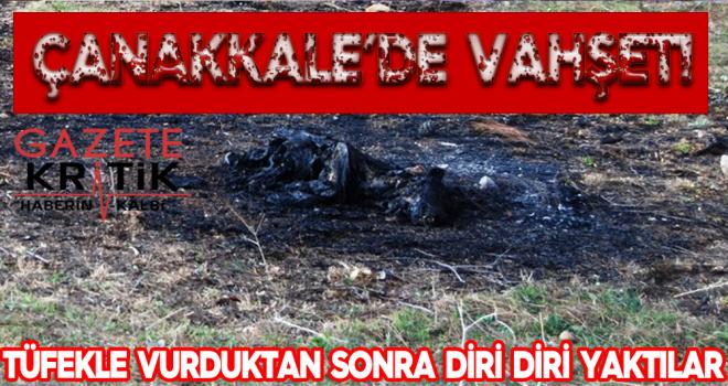 Çanakkale'de vahşet! Tüfekle vurduktan sonra diri diri yaktılar