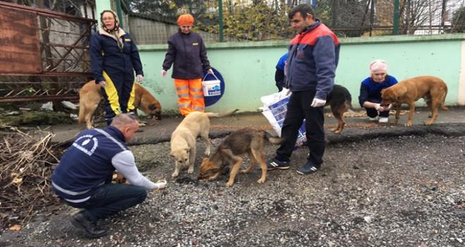 Ümraniye'de çeşitli noktalara kedi ve köpek evleri yerleştirildi